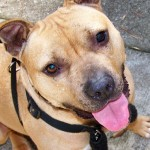 Project HALO helps pets live on
