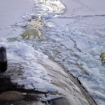 EarthTalk: Polar bears are disappearing? Tell me it ain't so!