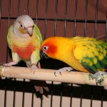 N.C. State offers exotic pets specialized care